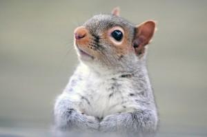 squirrel-612369_1280