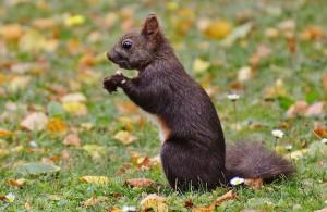 squirrel-860160_1280