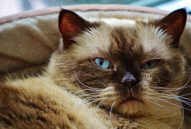cat-1392009_1920 (800x540)