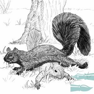 Fallen Squirrel (600x600)_bak